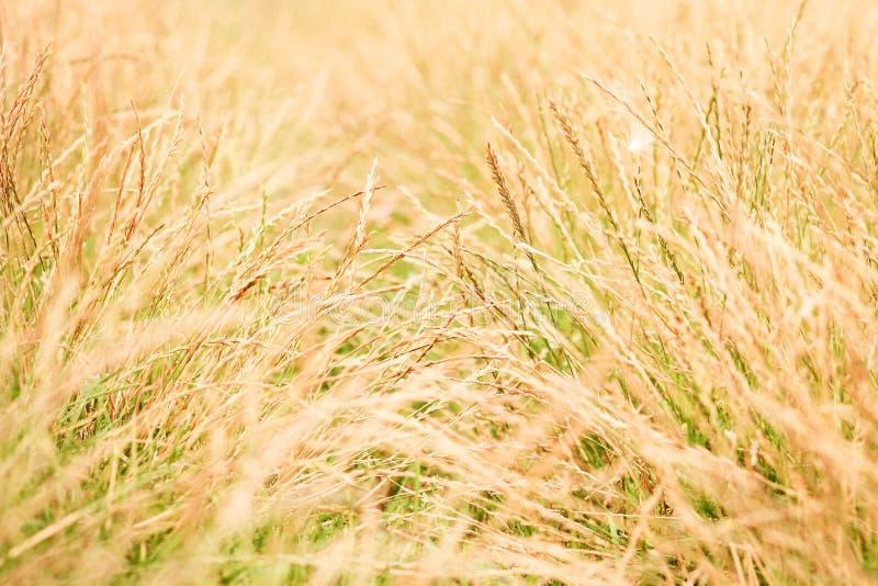 Abstracte de aardachtergrond van de lente of van de zomer met gras in de weide en blauwe hemel in de rug royalty-vrije stock fotografie