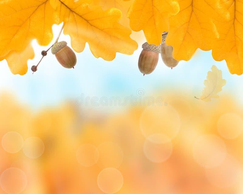 Abstracte de herfst gele achtergrond royalty-vrije stock afbeelding