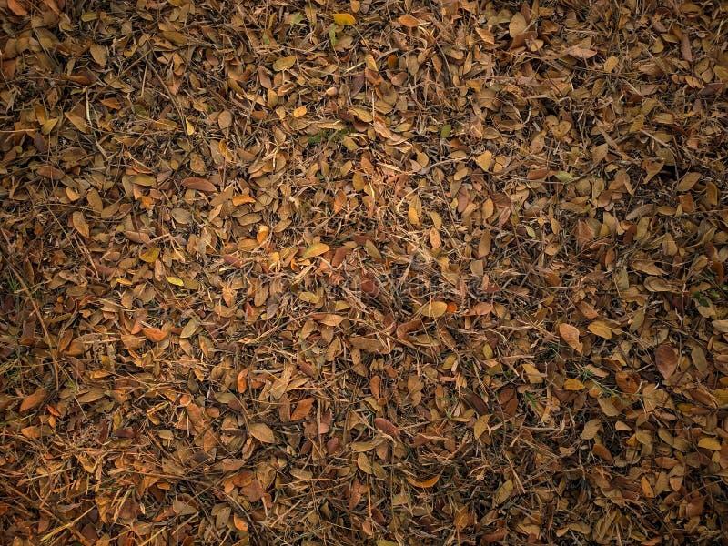 Abstracte de textuurachtergrond van de herfstbladeren stock afbeelding