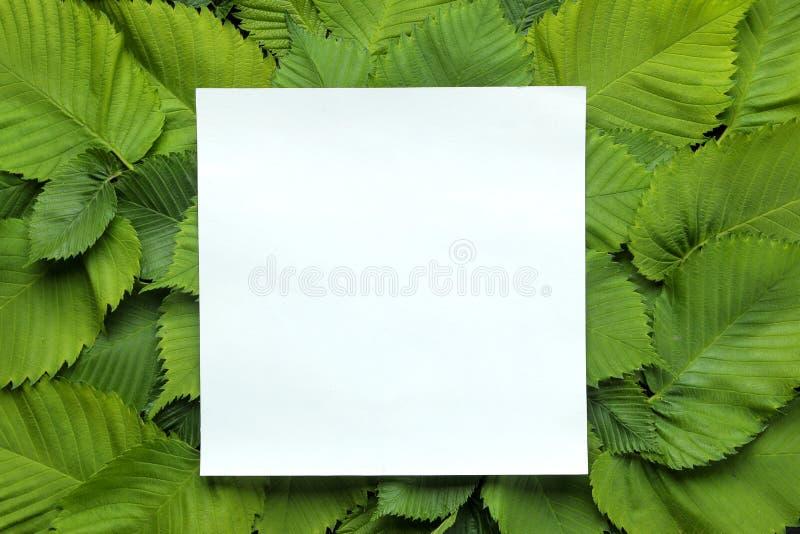 Abstracte de zomersamenstelling Spatie voor tekst en mooie groene bladeren Hoogste mening royalty-vrije stock fotografie