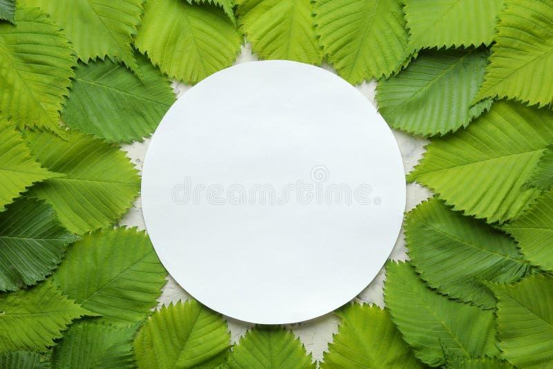 Abstracte de zomersamenstelling Spatie voor tekst en mooie groene bladeren Hoogste mening royalty-vrije stock foto