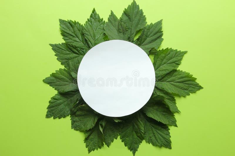 Abstracte de zomersamenstelling Spatie voor tekst en mooie groene bladeren op een heldergroene achtergrond Hoogste mening Vrije p royalty-vrije stock fotografie