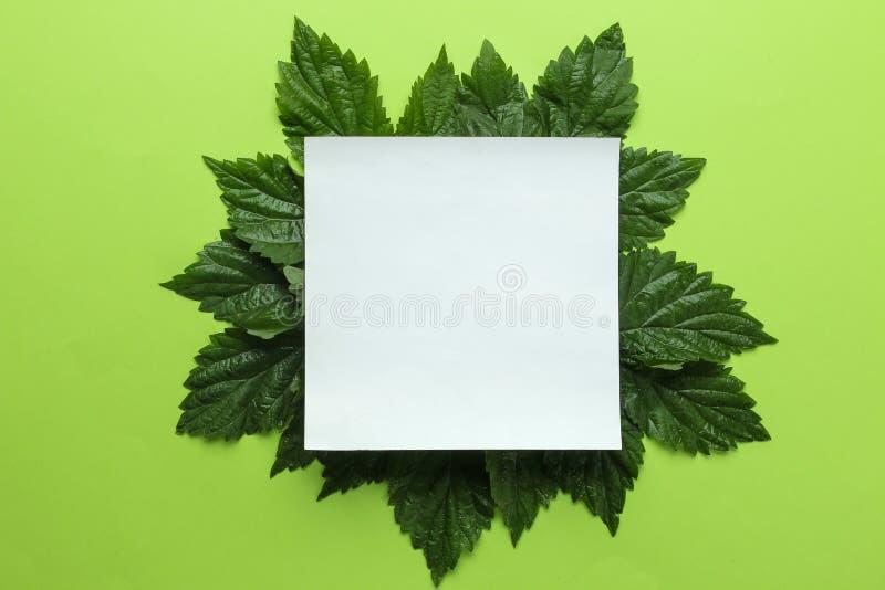 Abstracte de zomersamenstelling Spatie voor tekst en mooie groene bladeren op een heldergroene achtergrond Hoogste mening Vrije p royalty-vrije stock foto