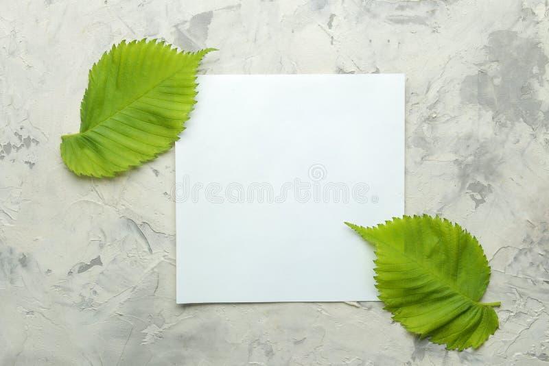 Abstracte de zomersamenstelling Spatie voor tekst en mooie groene bladeren op een lichte concrete achtergrond Hoogste mening Vrij stock afbeeldingen