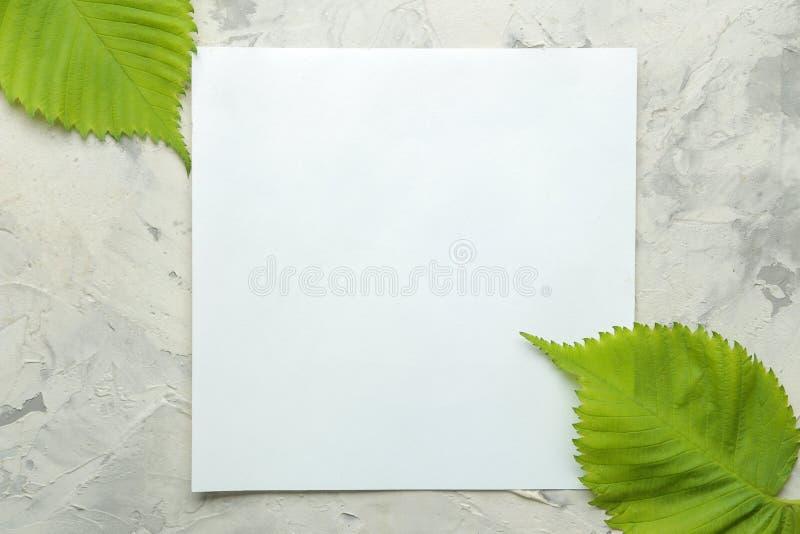 Abstracte de zomersamenstelling Spatie voor tekst en mooie groene bladeren op een lichte concrete achtergrond Hoogste mening Vrij stock fotografie