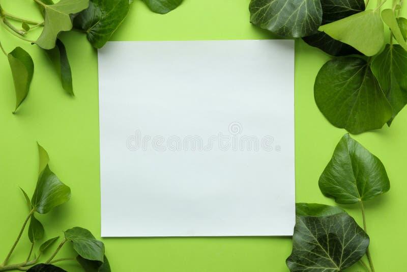 Abstracte de zomersamenstelling Spatie voor tekst en mooie groene klimopbladeren op heldergroene achtergrond Hoogste mening Vrije royalty-vrije stock foto's