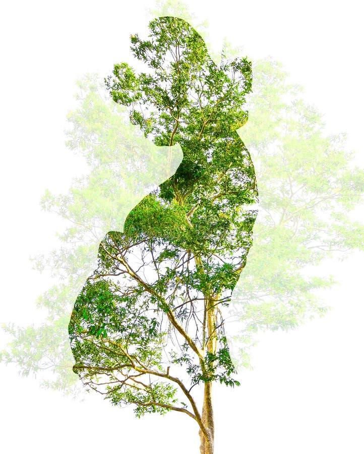 Abstracte Dubbele blootstellingskunst zwanger met takboom en bloem stock afbeelding