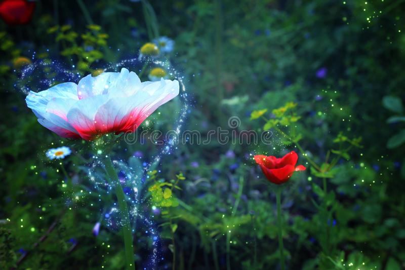 Abstracte en magische foto van bloem met Glimworm die in het concept van het nacht bossprookje vliegen stock illustratie