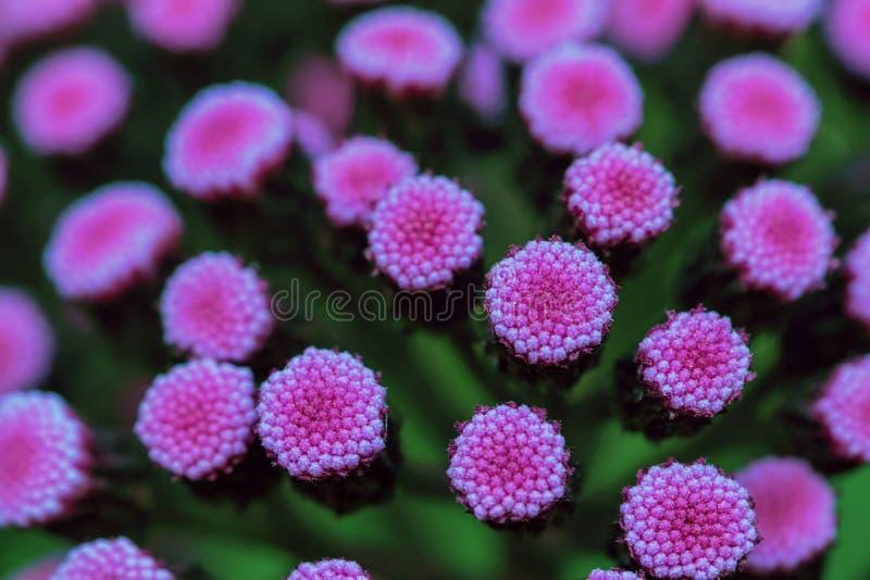 Abstracte foto van kleine roze en purpere bloemen royalty-vrije stock foto's