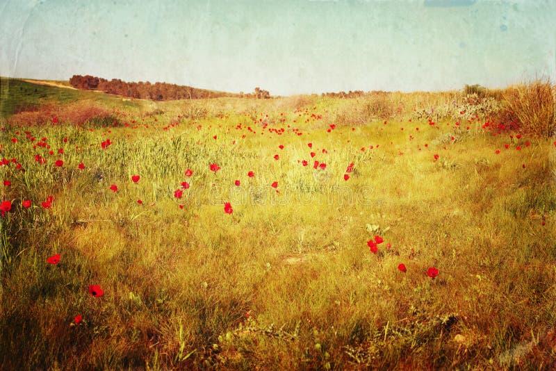 Abstracte foto van rood papaversgebied gefiltreerd en geweven beeld royalty-vrije stock foto's