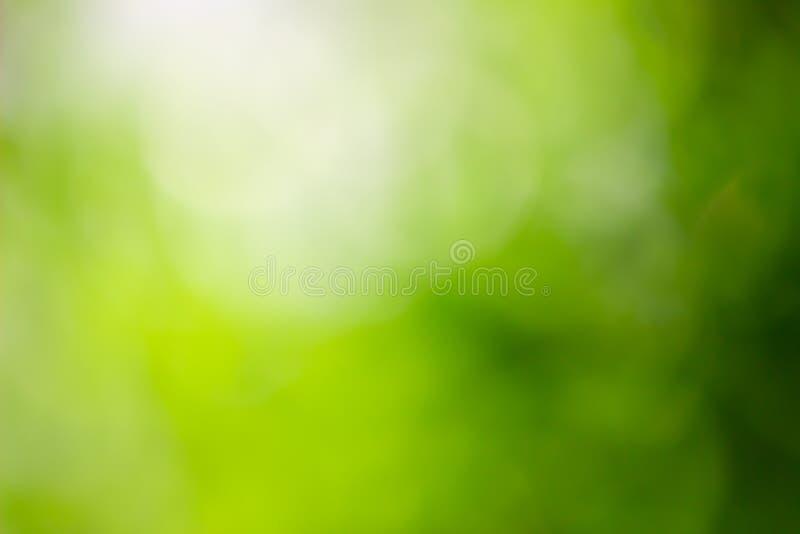Abstracte groene achtergrond met helder zonlicht royalty-vrije stock afbeeldingen