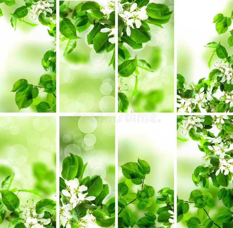 Abstracte Groene Behangachtergrond met de Lentegebladerte stock afbeeldingen