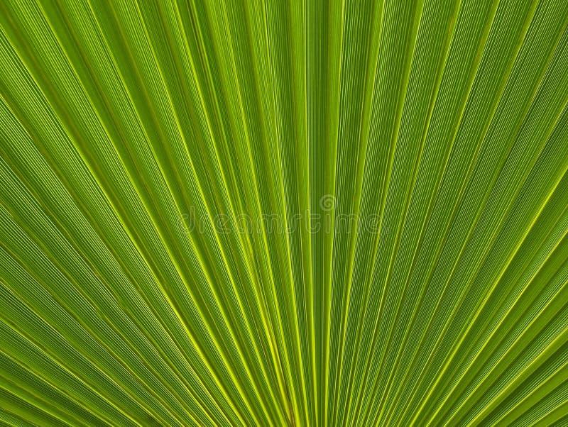 Abstracte groene de textuur dichte omhooggaand van het palmblad Heldere tropische natuurlijke achtergrond met exemplaarruimte voo royalty-vrije stock foto