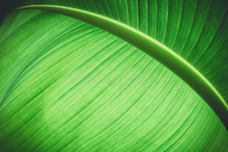 Abstracte groene gekleurde installatie stock foto