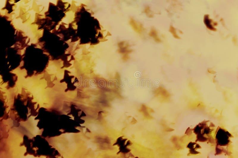 Abstracte Halloween-achtergrond, heksenheksensamenkomst op Halloween-nacht stock afbeeldingen