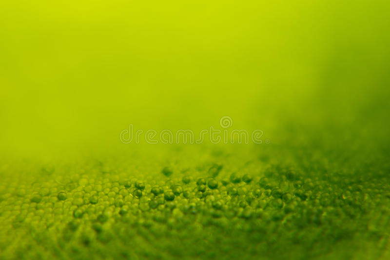 Abstracte heldergroene de lenteachtergrond met onduidelijk beeld en fonkelingen De achtergrond van de lente De zomerachtergrond royalty-vrije stock afbeelding