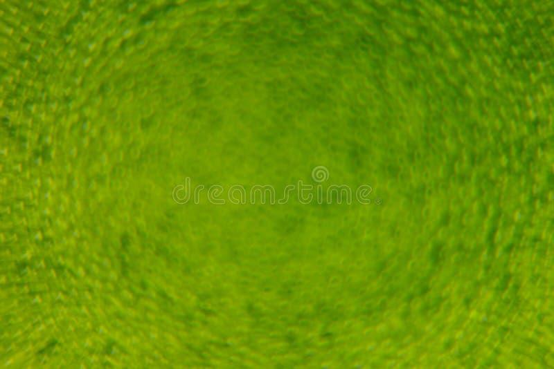 Abstracte heldergroene de lenteachtergrond met onduidelijk beeld en fonkelingen De achtergrond van de lente De zomerachtergrond vector illustratie