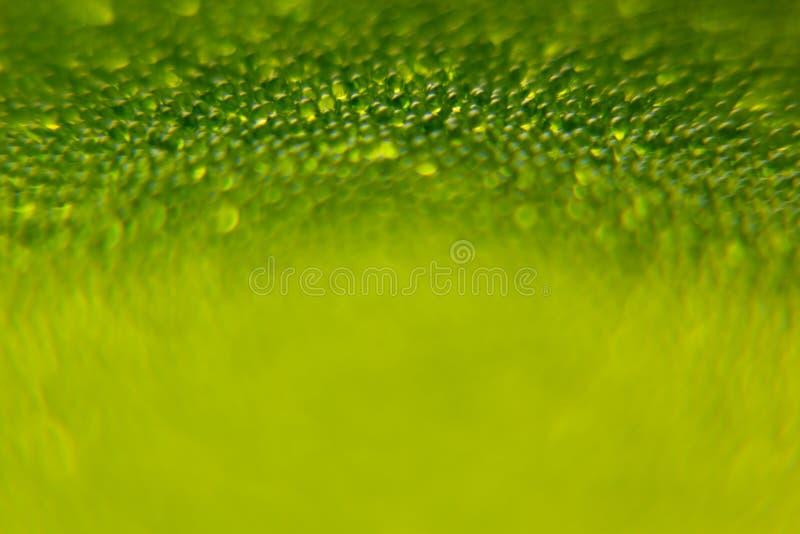 Abstracte heldergroene de lenteachtergrond met onduidelijk beeld en fonkelingen De achtergrond van de lente De zomerachtergrond royalty-vrije stock foto's