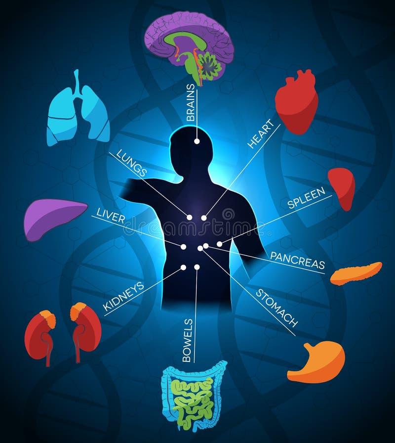 Abstracte lichaamsdeelanatomie royalty-vrije illustratie