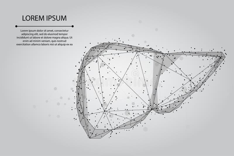 Abstracte lijn en punt menselijke lever Lage poly Healthcare vector illustratie