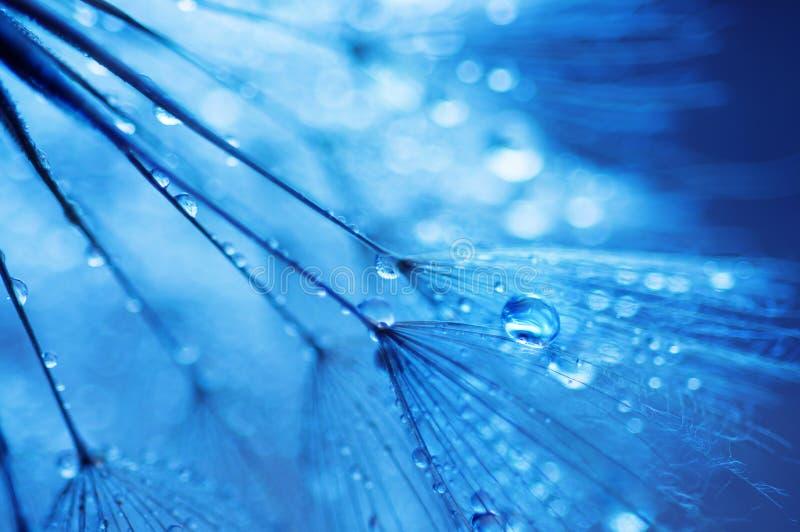 Abstracte macrofoto van installatiezaden met waterdalingen royalty-vrije stock afbeeldingen