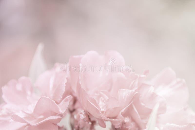 Abstracte mooie roze het patroontextuur van de bloemenclose-up stock foto's