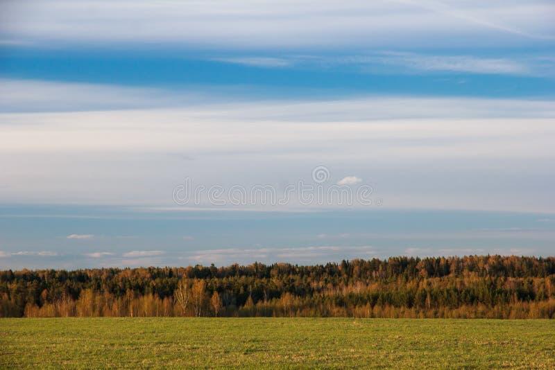 Abstracte natuurlijke achtergrond De lentegebied en bos royalty-vrije stock afbeelding