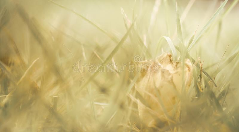 Abstracte natuurlijke achtergrond, Mooi close-upgras in zonneschijn op de zomer stock fotografie