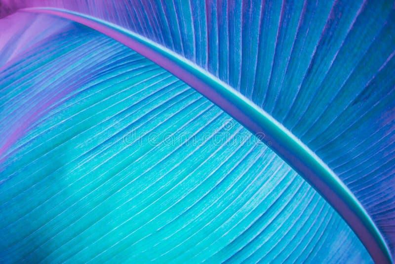 Abstracte neon gekleurde installatie stock foto's