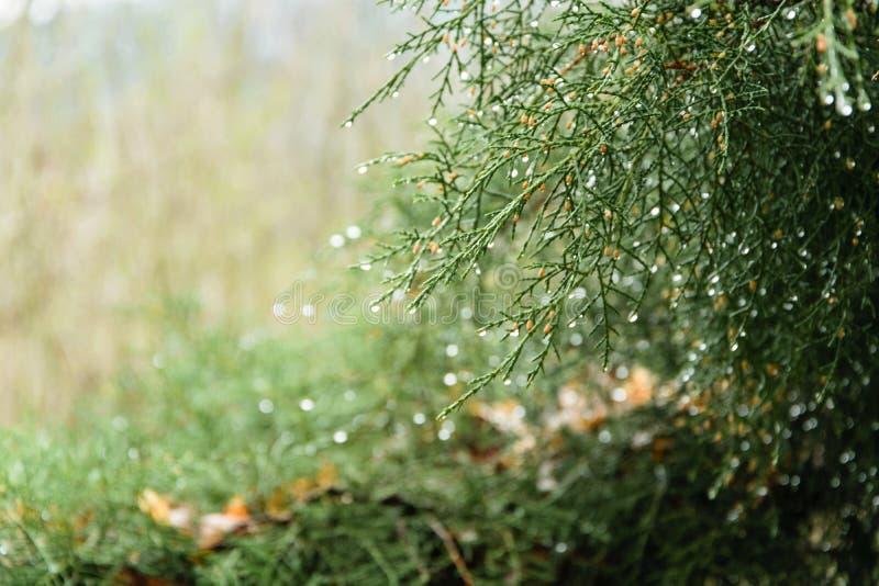 Abstracte onscherpe achtergrond van groene pijnboom met waterdalingen stock afbeeldingen