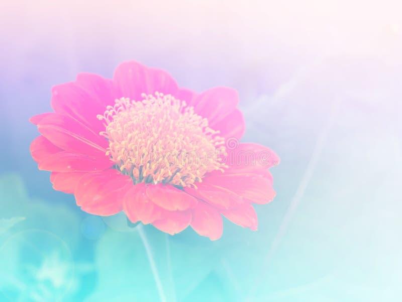 Abstracte Onscherpe de Bloem kleurrijke achtergrond van Zinnia royalty-vrije stock afbeelding