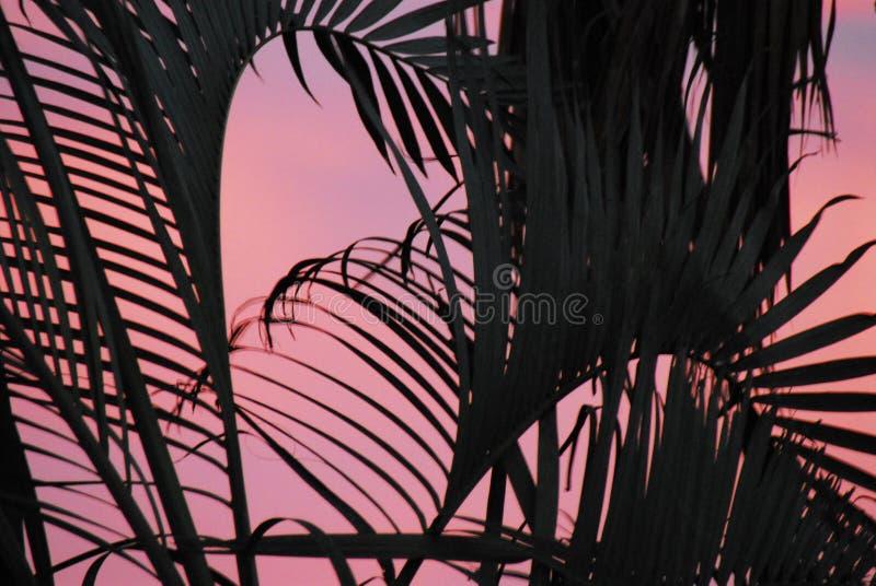 ABSTRACTE Palmen die in de Zonsondergang van BaJa blazen Mexico stock afbeelding
