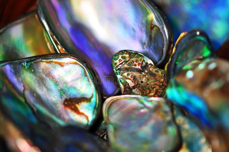 Abstracte pauashells heldere levendige kleur als achtergrond stock afbeeldingen