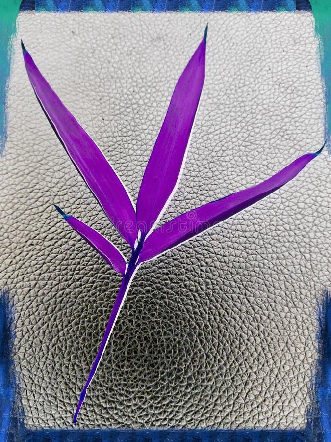 Abstracte purpere die bamboebladeren door mobiele telefoon worden gefotografeerd en worden behandeld stock afbeeldingen