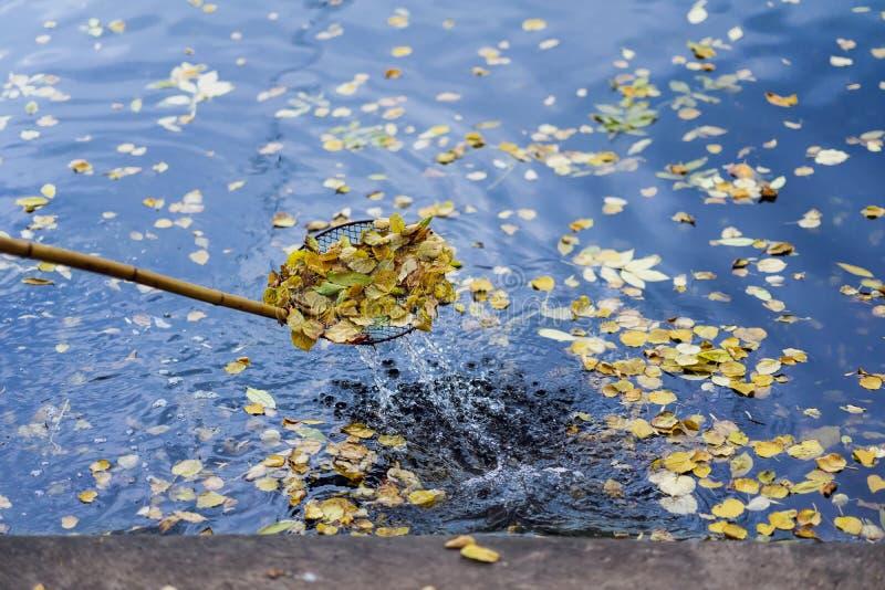 Abstracte schoonmakende zwemmende vijver in het park van gevallen bladeren met speciaal netwerk, schuimspaan, de herfst Kleurrijk royalty-vrije stock afbeelding