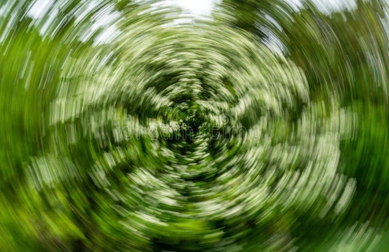 Abstracte Spiraalvormige Effect Achtergrond - Haagdoornboom stock afbeeldingen