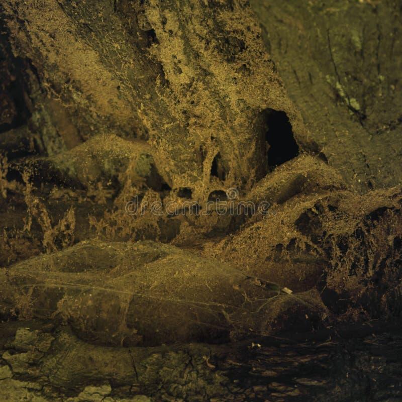 Abstracte textuur als achtergrond voor een mystiek beeld van hout en Web stock foto