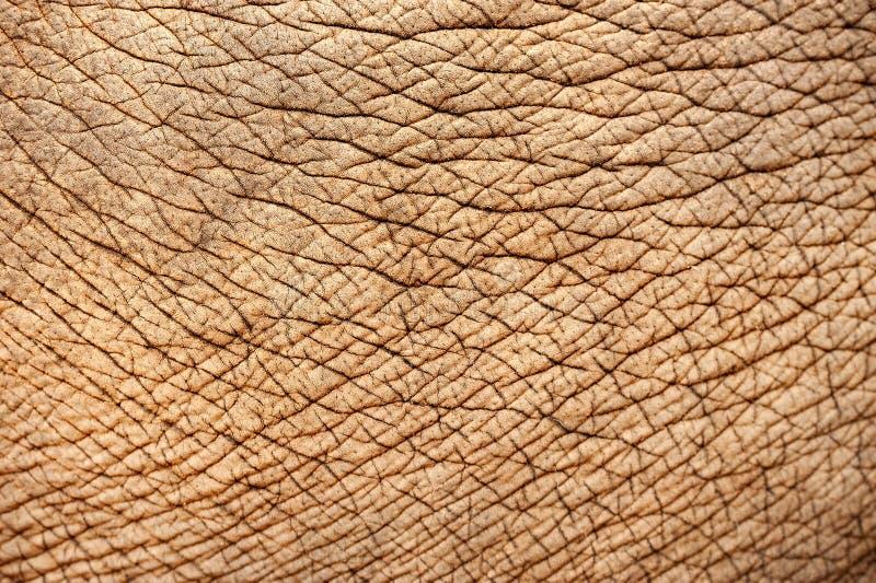 Abstracte textuur van olifantshuid royalty-vrije stock afbeeldingen