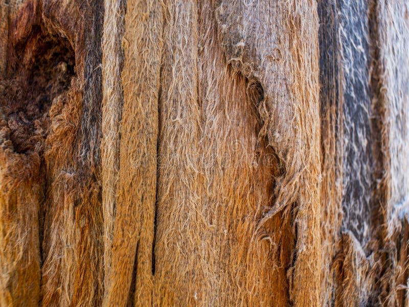 Abstracte textuur van oud die hout door tijd en aard wordt gevormd Houten textuurachtergrond stock afbeelding