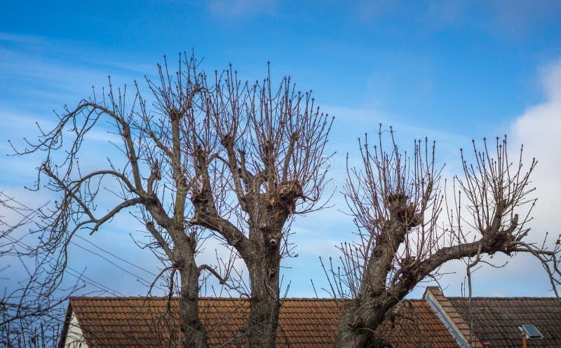 Abstracte treetops voor een huis royalty-vrije stock afbeeldingen