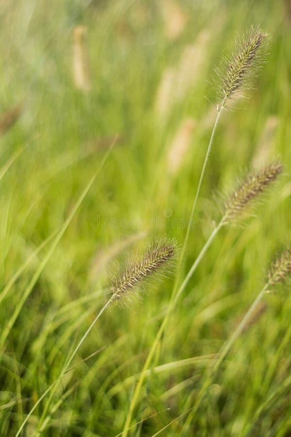 Abstracte verticale achtergrond van gras en licht, royalty-vrije stock fotografie