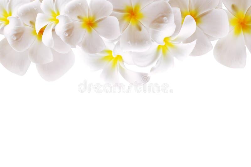 Abstracte Witte Bloemachtergrond met Ruimte stock foto