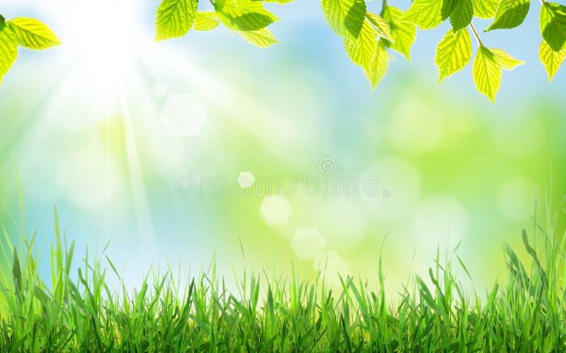 Abstracte zonnige de Lenteachtergrond stock afbeelding