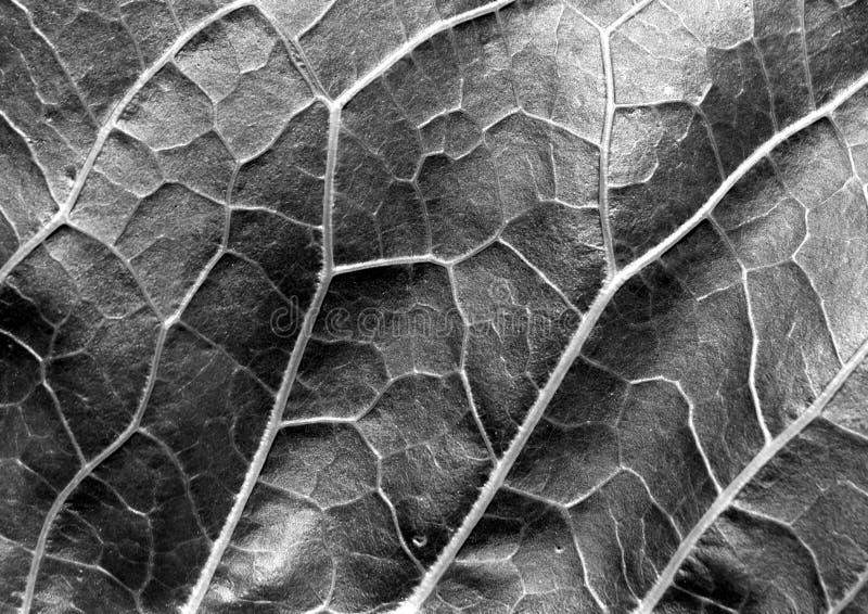 Abstracte zwart-witte bladtextuur stock afbeelding