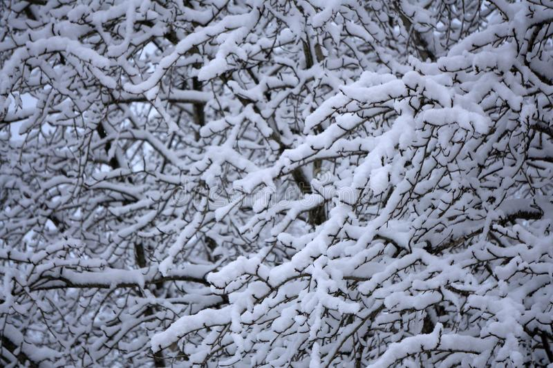 Abstracted black and white image of branches covered in a thin layer of hoarfrost. With copy space.  stock image