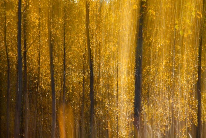 Abstraction automnale de forêt photo libre de droits