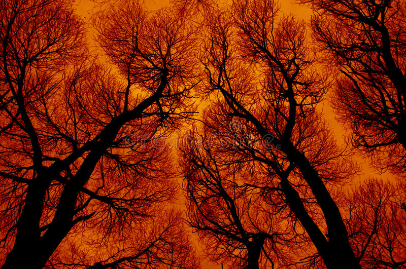 Download Abstraction In Fiery Colors Stock Image - Image: 20810571