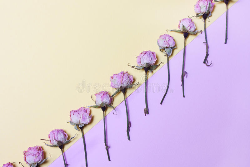 Abstraction of flowers in a row. Background in pastel colors,view above stock images