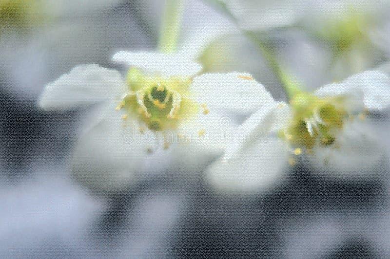 Abstraction. Flowers of Siberian cherry. Rain. Window stock image