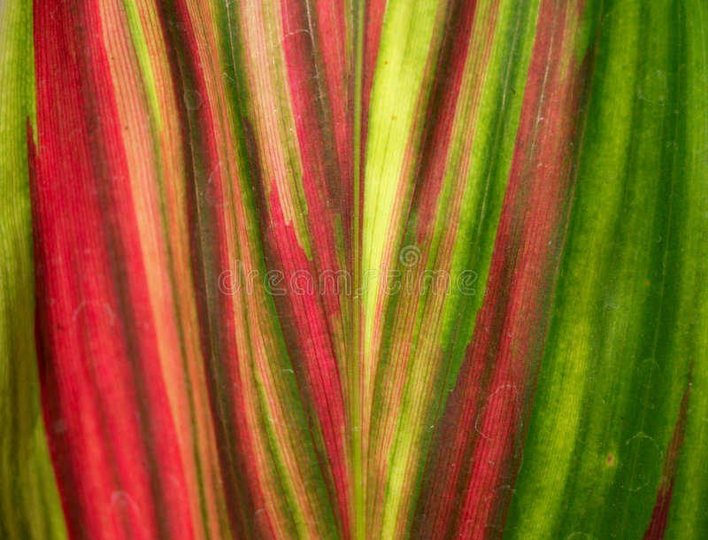 Abstraction of a green royalty free stock photography
